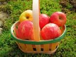 Cestini per la frutta - photo 3