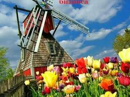 EU Integration Center предлагает бизнес – туры в Нидерланды - фото 2