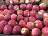 Polish apples, La-Sad - фото 3