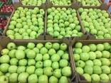 Polish apples, La-Sad - фото 7