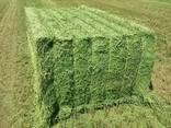Top quality alfalfa hay - photo 2