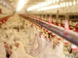 Выставка животноводства в Нидерландах